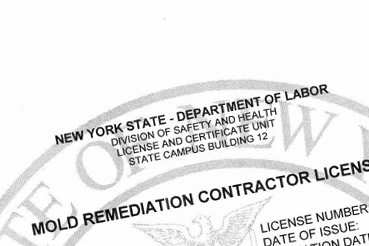 Queens Mold Remediation