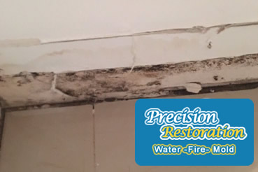 Mold removal in Queens